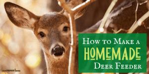 How to Make a Homemade DIY Deer Feeder